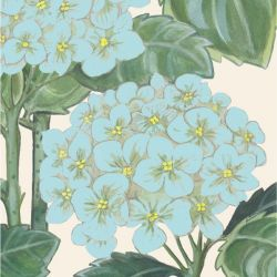 secret garden hydrangea allover blue cream