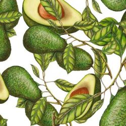 fruit veg avocado leaf