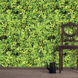 green walls lime leaf