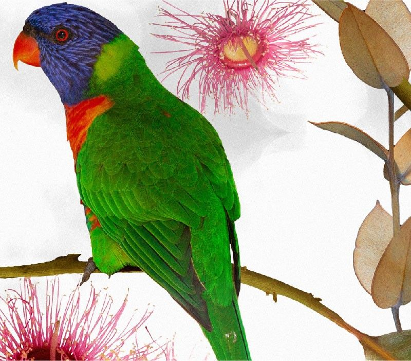 australian forest beaks and blooms bright detail